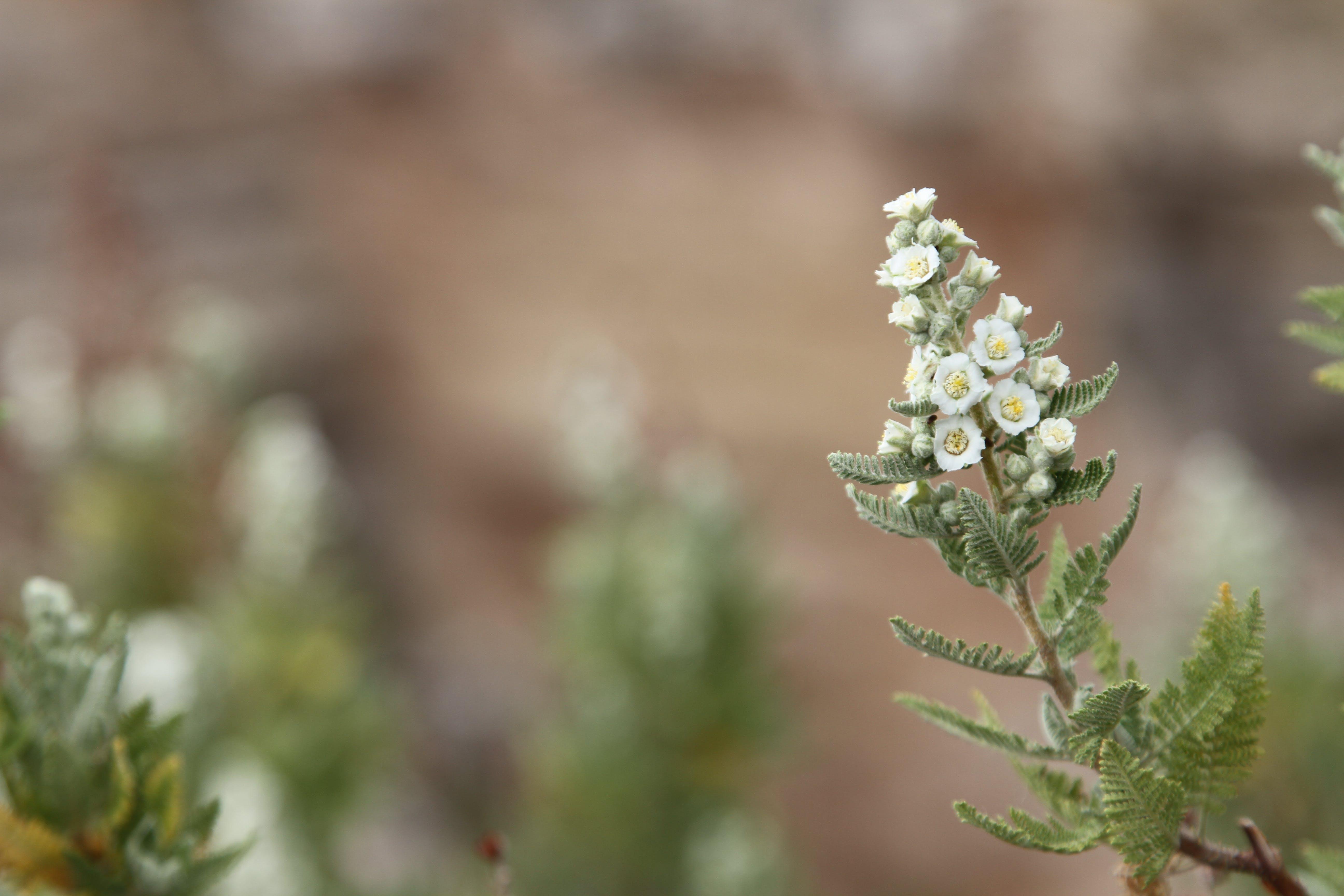 Free stock photo of flower, macro, macro photo, macro photography