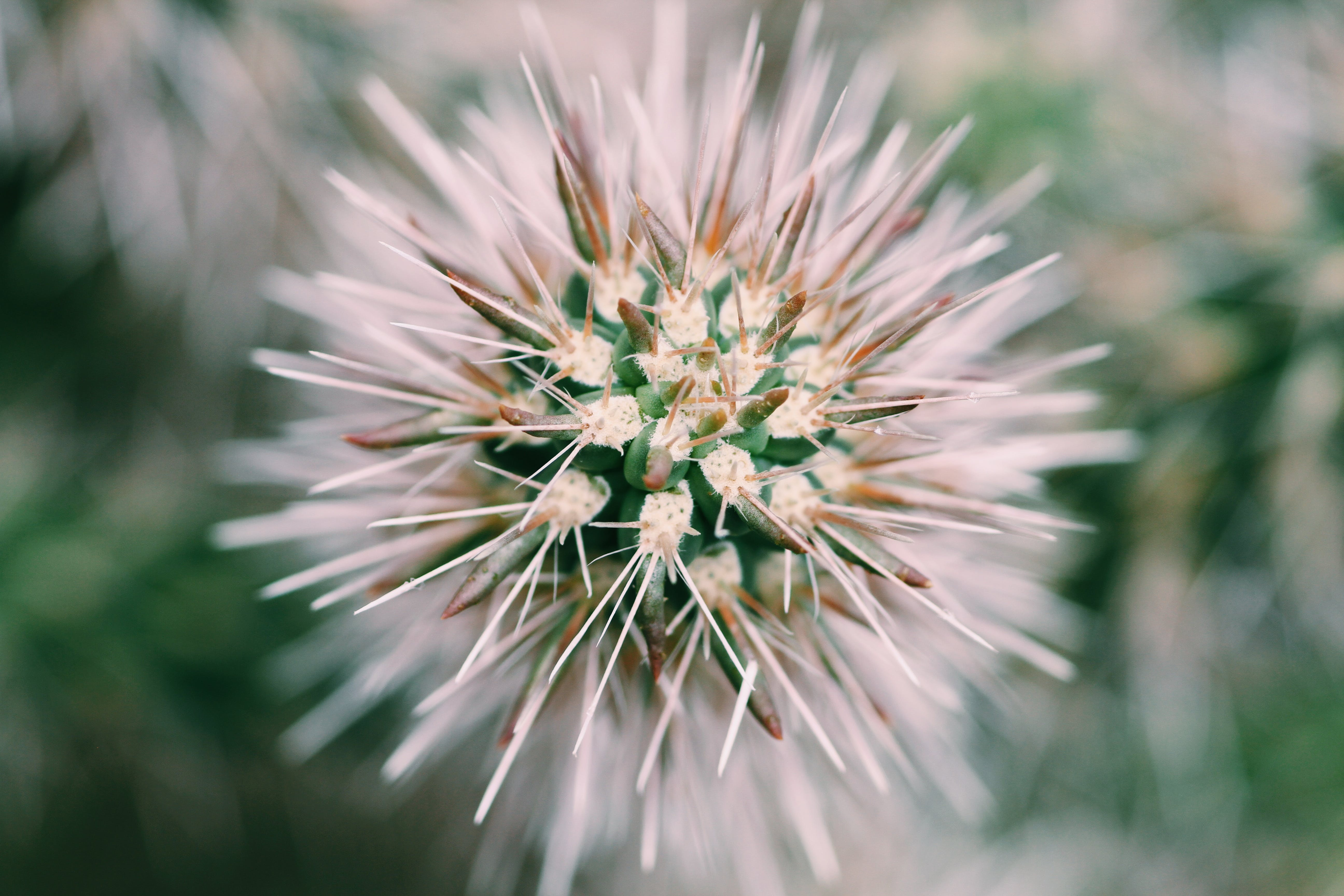 Free stock photo of cactus, cactus plant, macro, macro photo