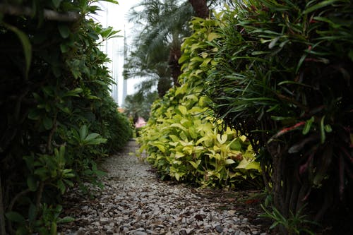 Foto d'estoc gratuïta de botànic, brillant, color, creixement