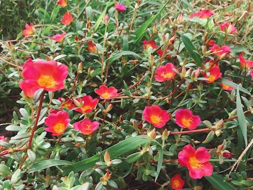 Gratis lagerfoto af bi, blomsterhave, smukke blomster