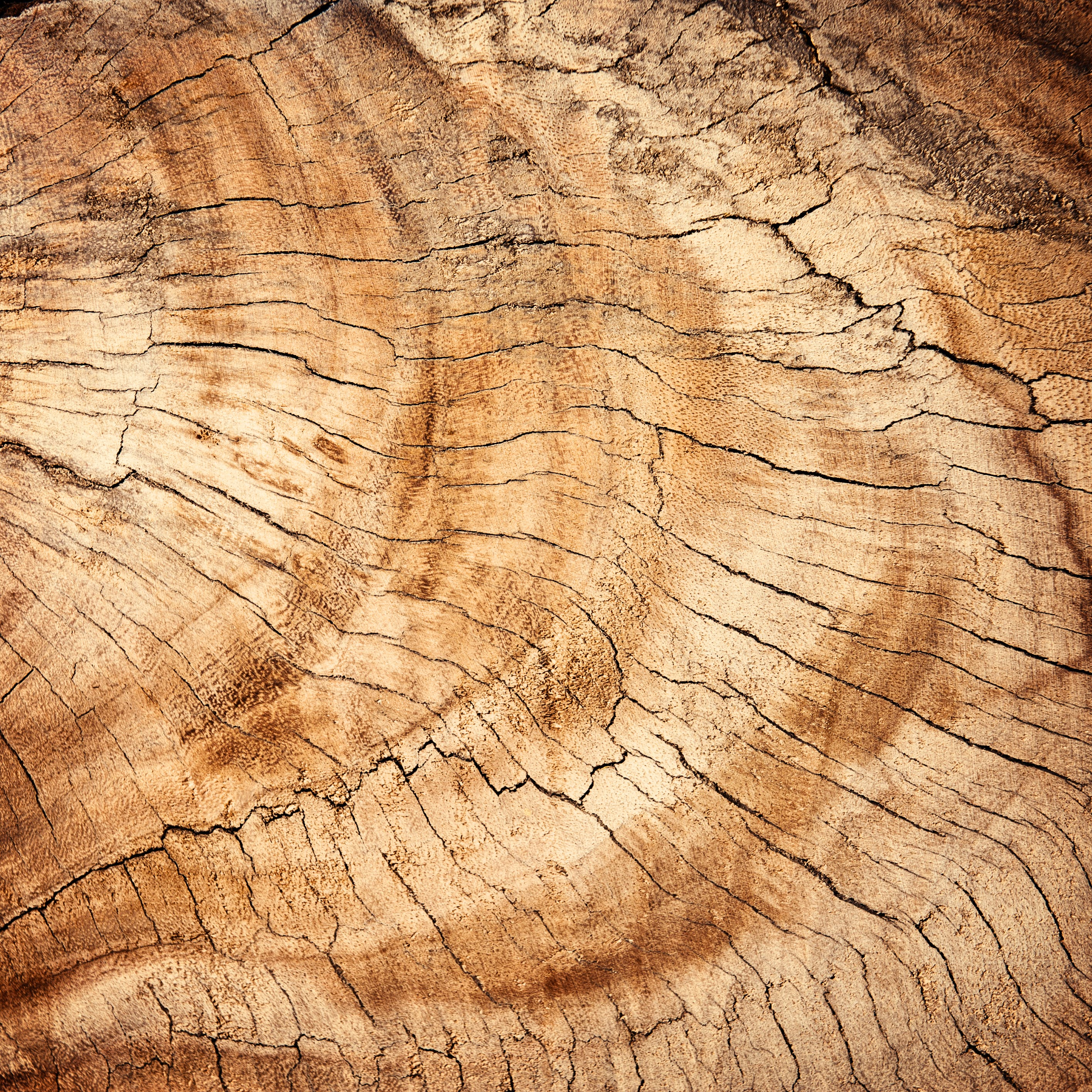 Free stock photo of wood, dark, pattern, texture