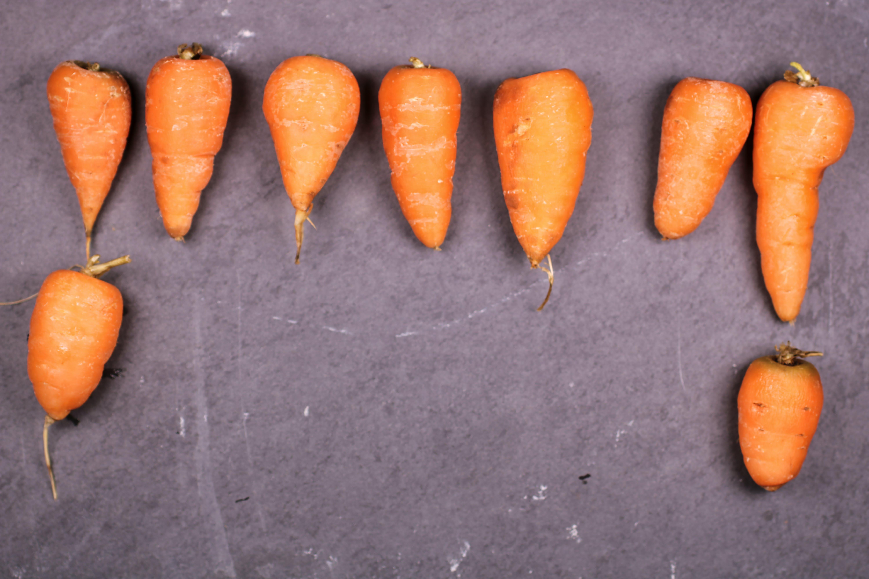 Free stock photo of carrot, carrots, orange, slate