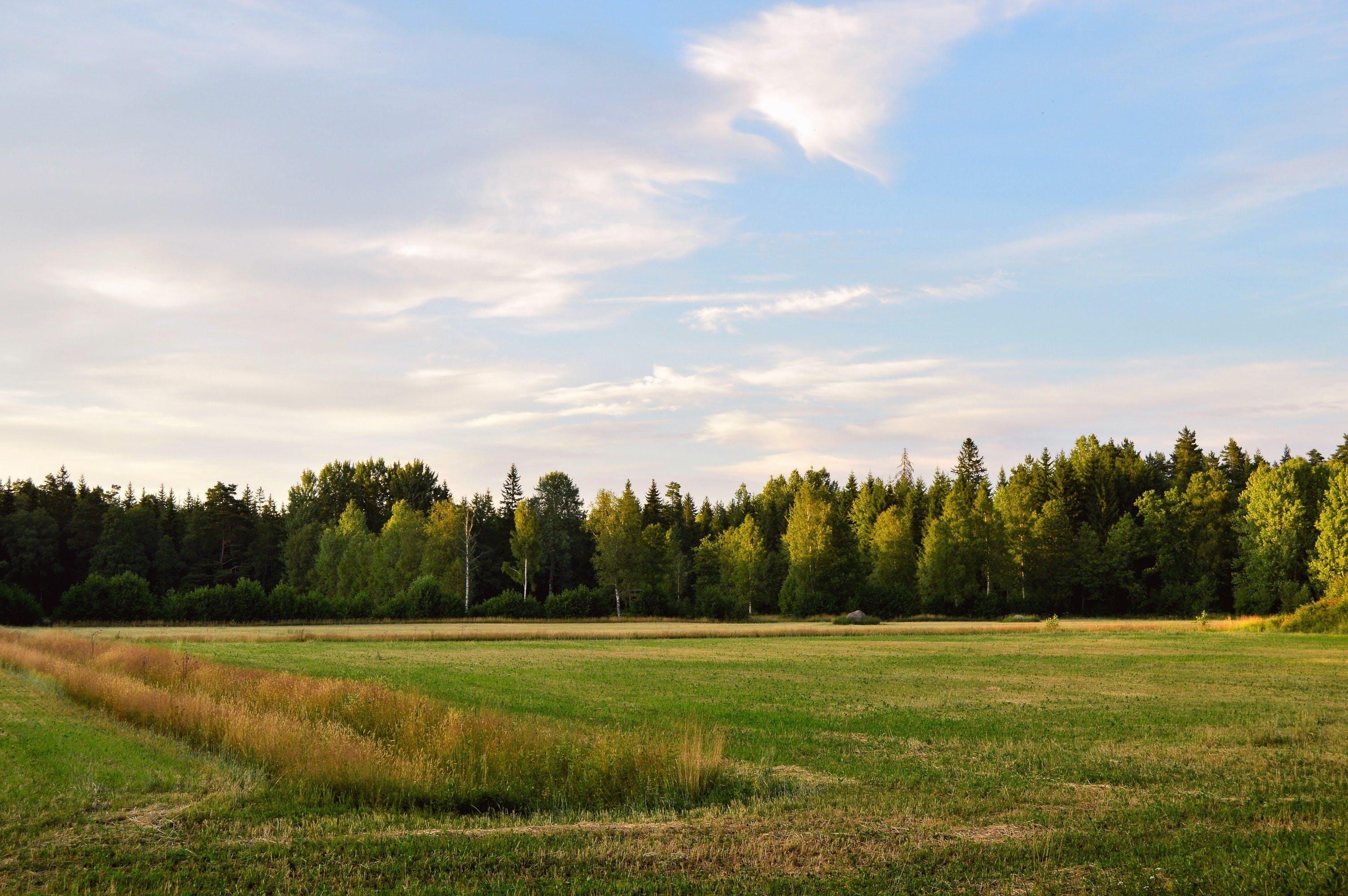 alberi, azienda agricola, campo
