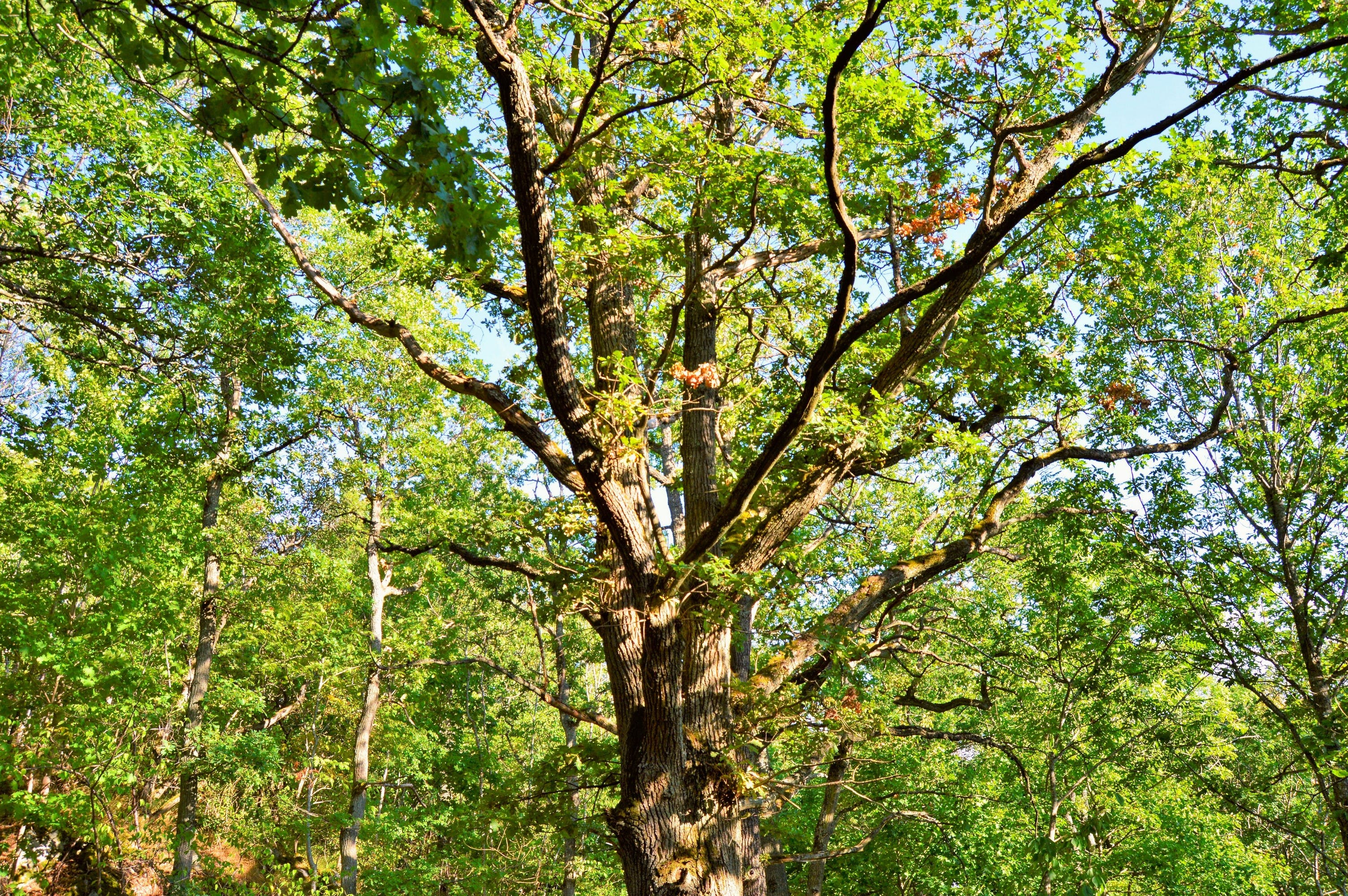 Ingyenes stockfotó fák, huskvarna, napos, nyár témában