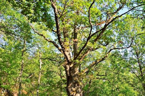 Free stock photo of huskvarna, nature, summer, sunny