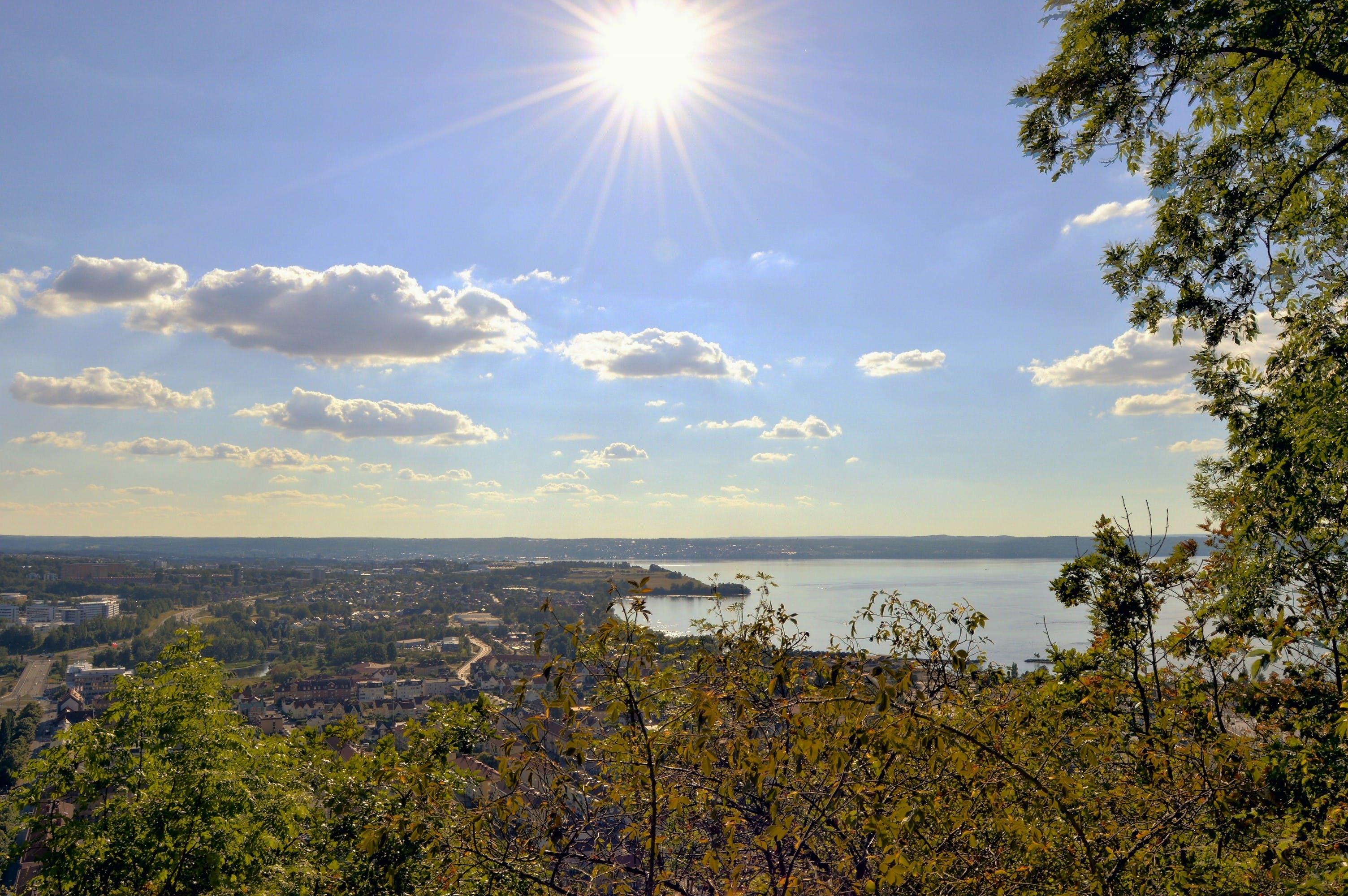 Fotos de stock gratuitas de agua, árbol, bosque, ciudad