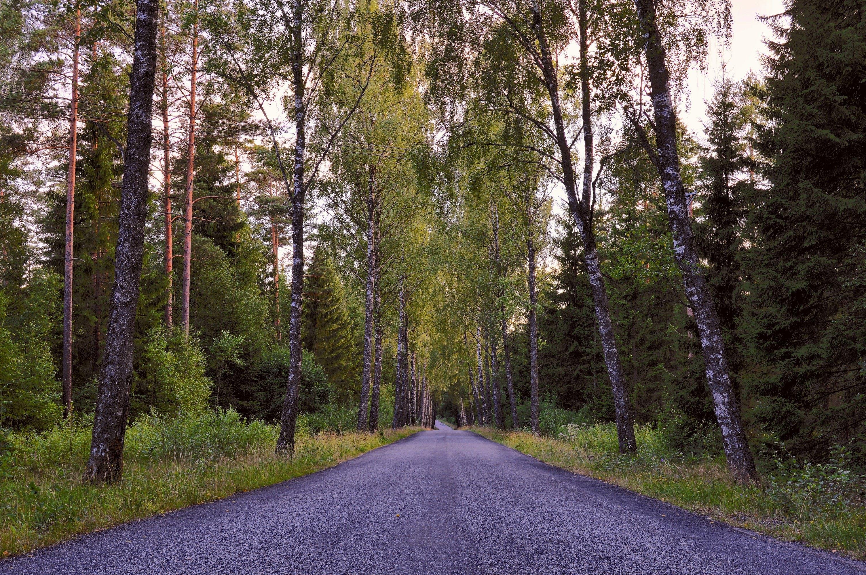 Fotos de stock gratuitas de árbol, arboles, bosque, carretera