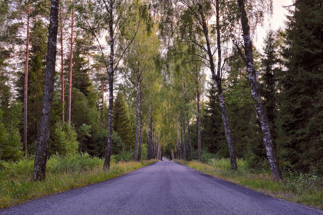 evening, forest, green