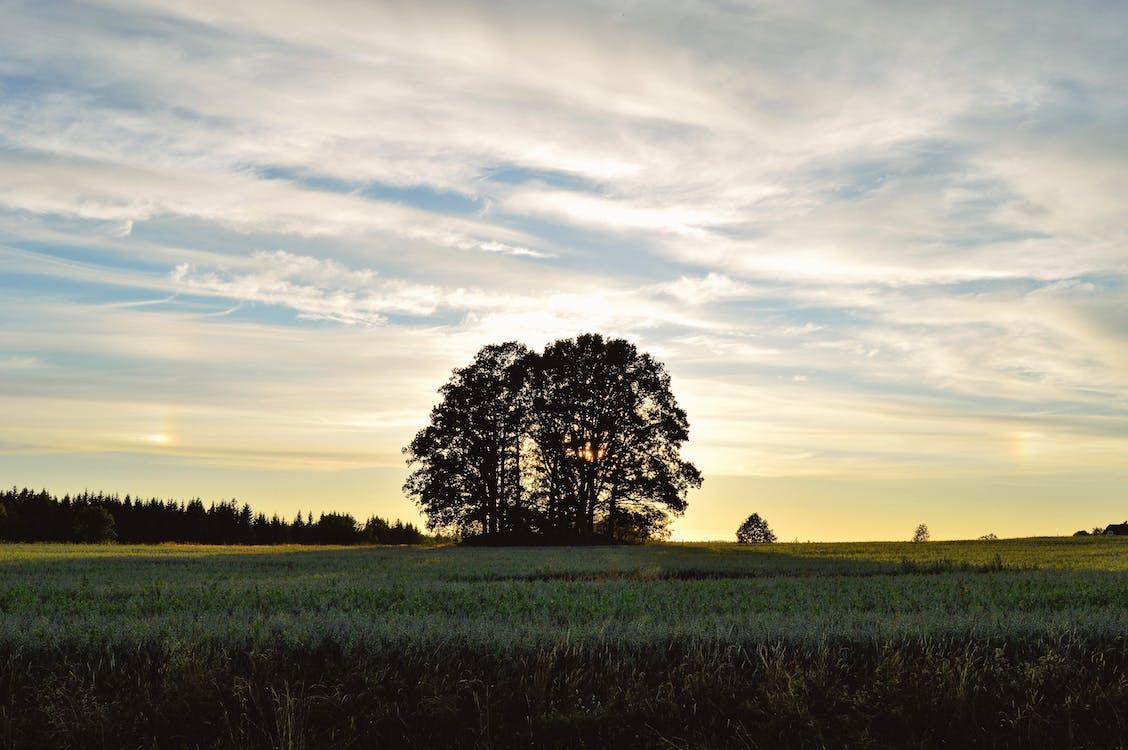 Hình ảnh Cây Lá Xanh Trên Cánh đồng Xanh Trong Ban Ngày Có Mây