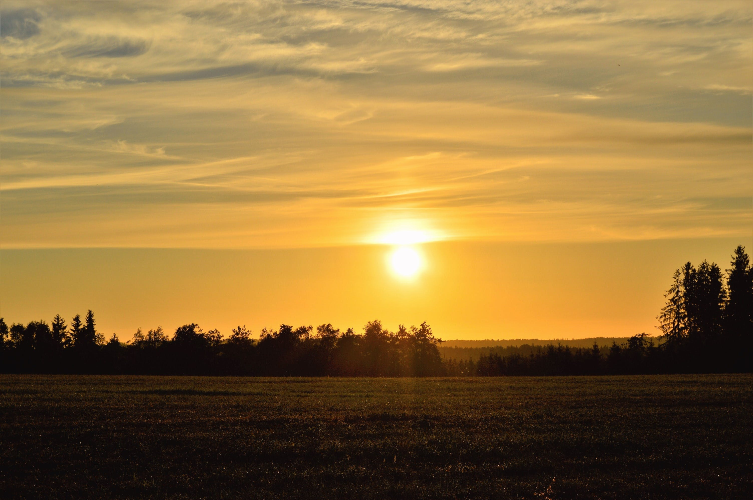 Fotos de stock gratuitas de amanecer, arboles, bonito, campo