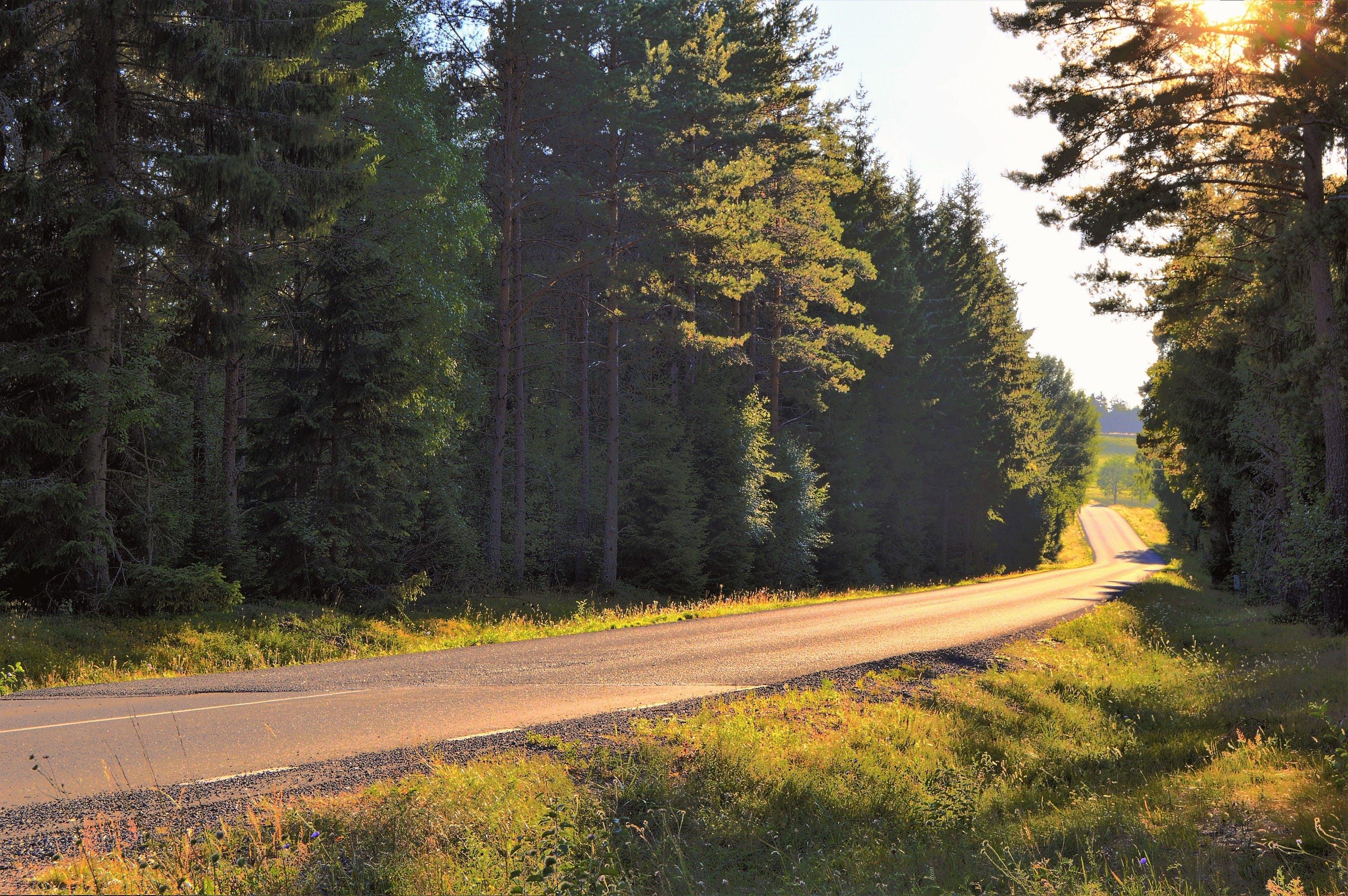 Fotos de stock gratuitas de arboles, bosque, brillante, camino
