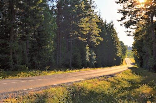 가을, 경치, 경치가 좋은, 도로의 무료 스톡 사진