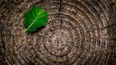 wood, nature, pattern