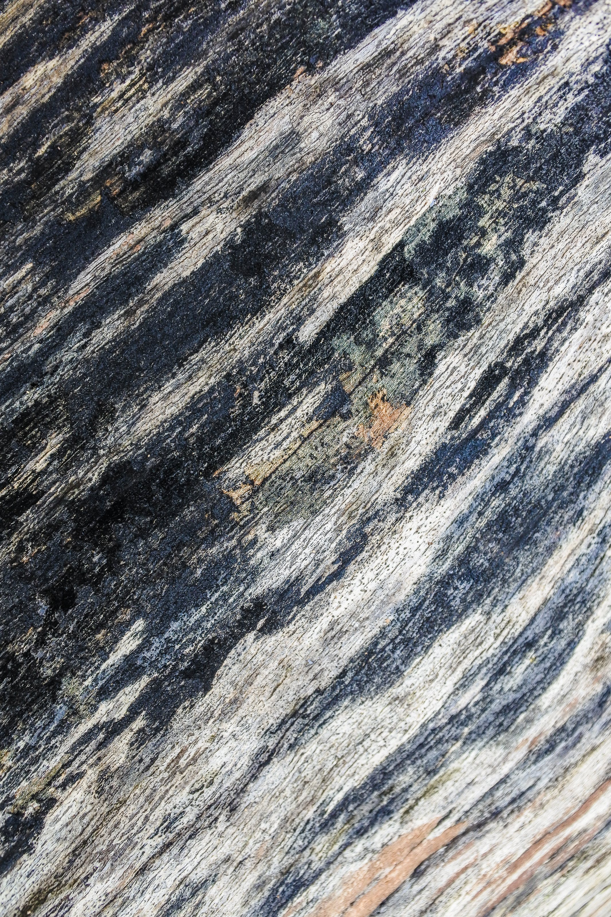 Free stock photo of abstract, alpine, background, bark