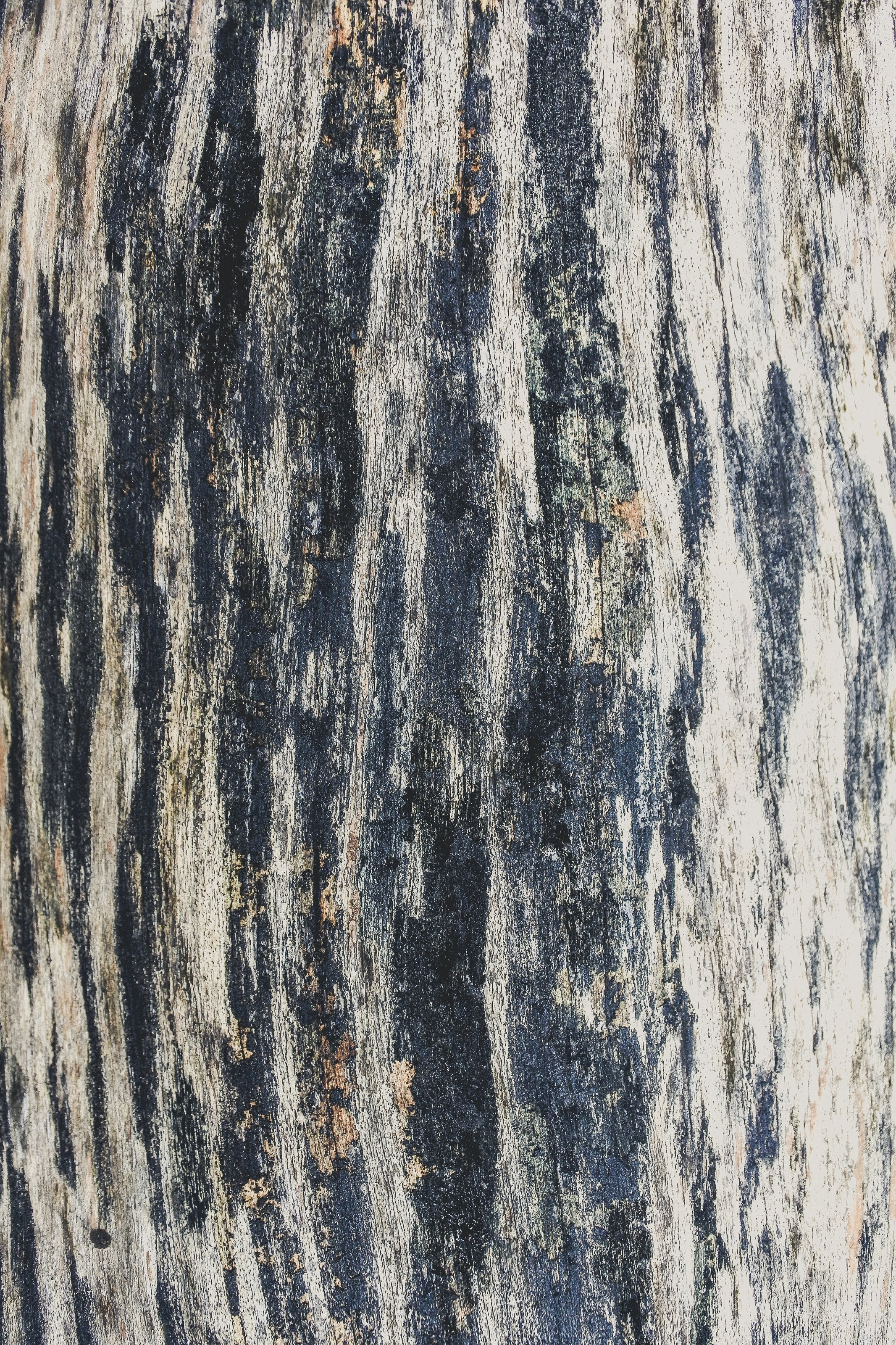 Free stock photo of wood, dry, texture, abstract