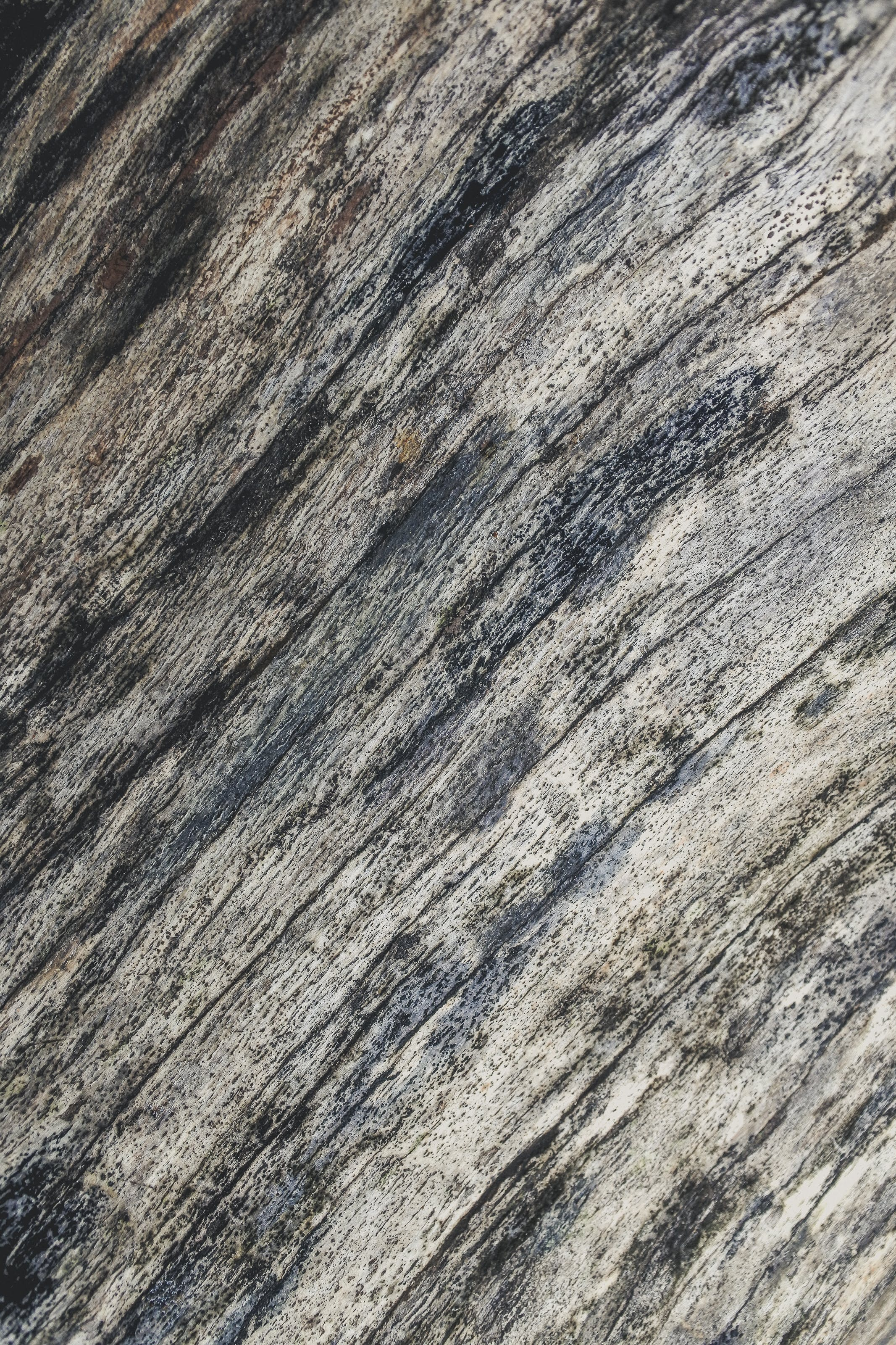 of abstract, alpine, background, bark