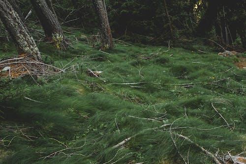 Gratis lagerfoto af dagslys, græs, grøn, landskab