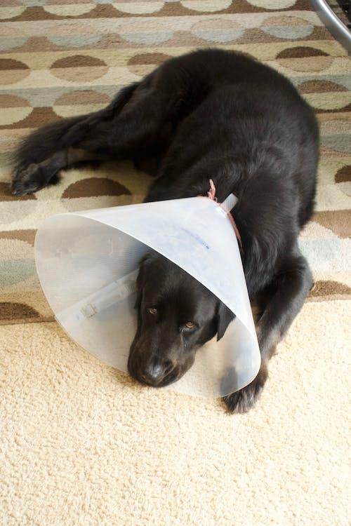 Gratis lagerfoto af behandling, elendighed, hund, kegle