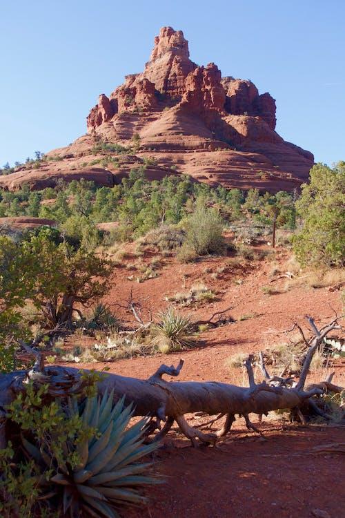 Gratis lagerfoto af natur, rød klippe, sedona, sydvest