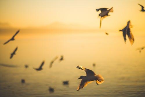 bulanık, deniz, deniz kıyısı, gün batımı içeren Ücretsiz stok fotoğraf