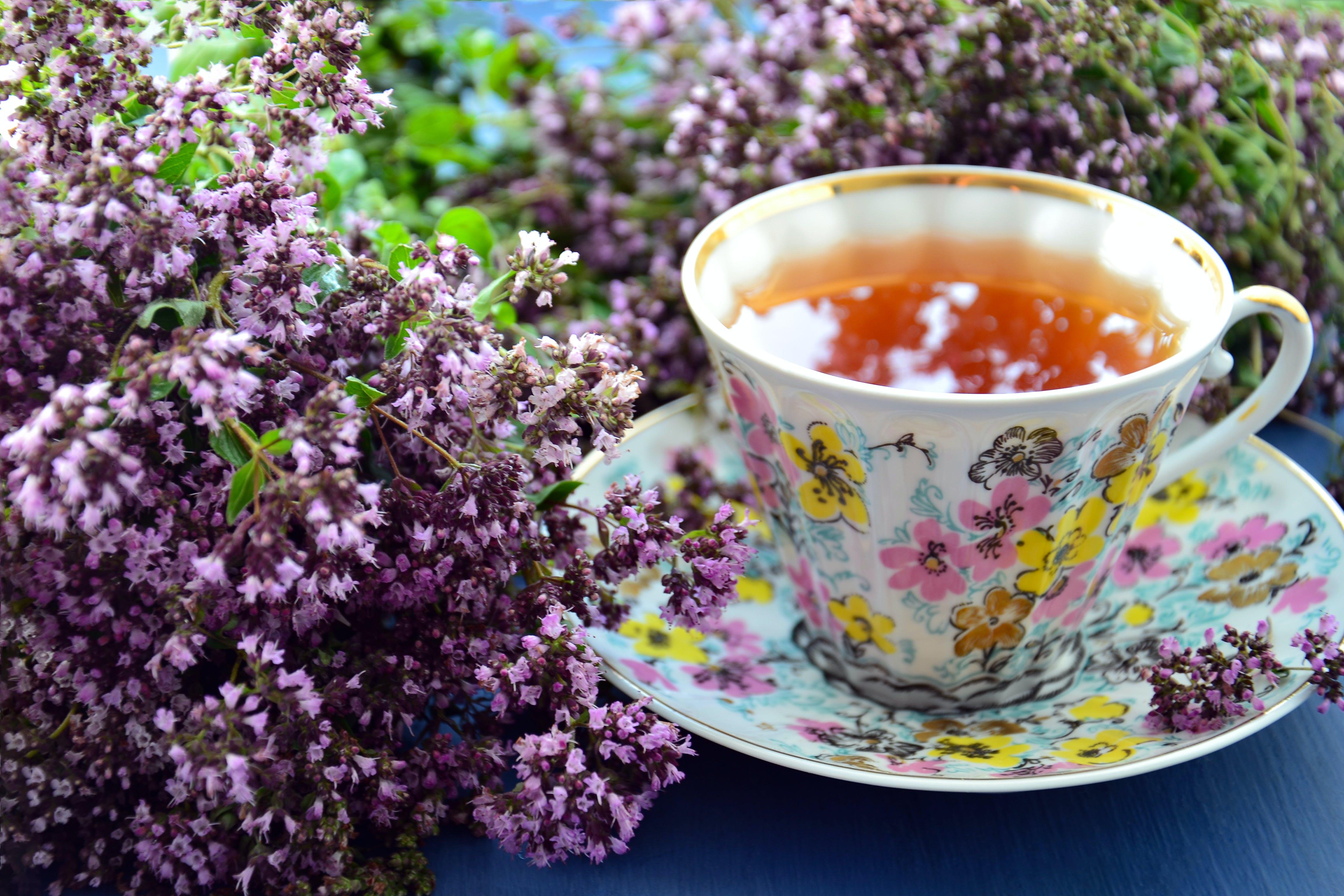 Free stock photo of травяной чай, фарфоровая чашка, фиолетовые цветы, чай