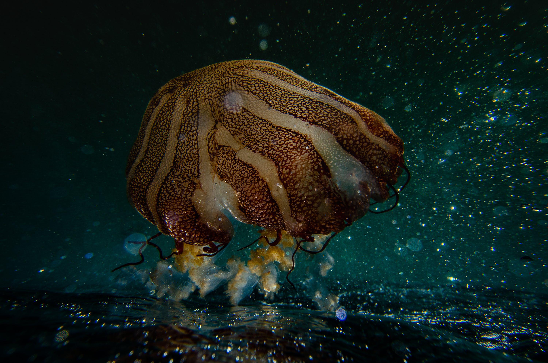 Sea Anemone Photography