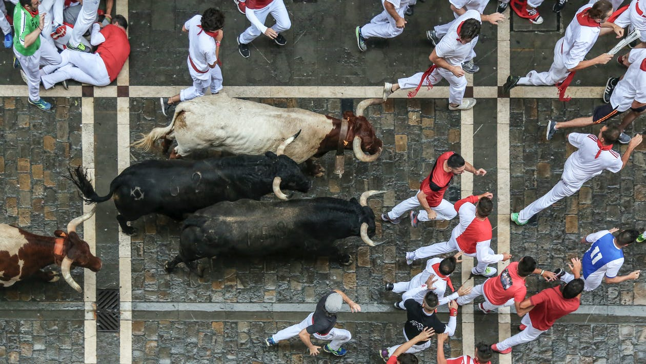Bird's Eye View Photography of Bull Surrounded With Men