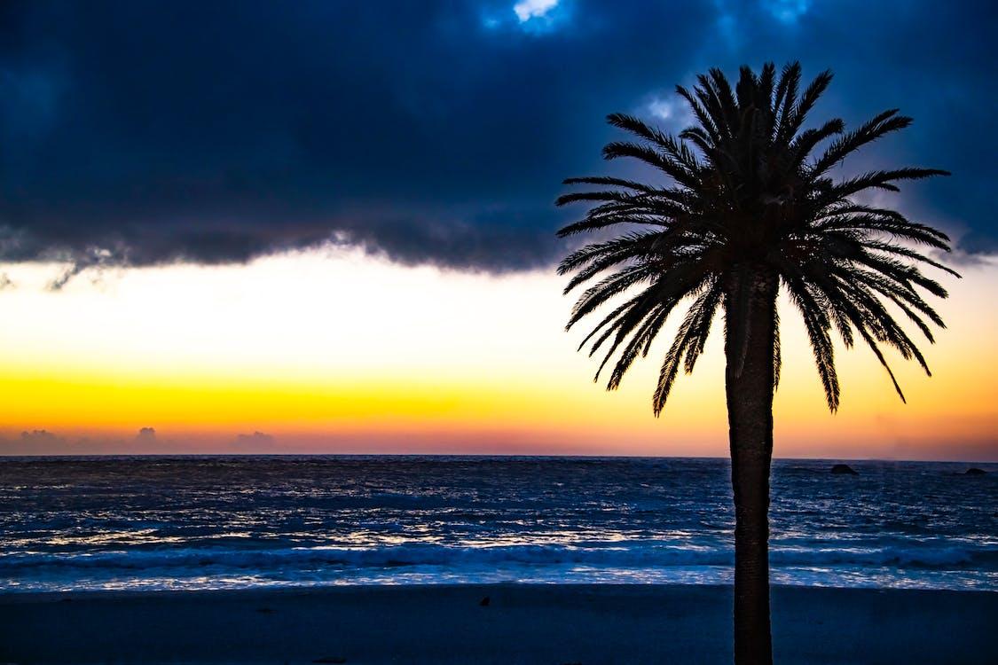 Silhouette of Tree Near Shore