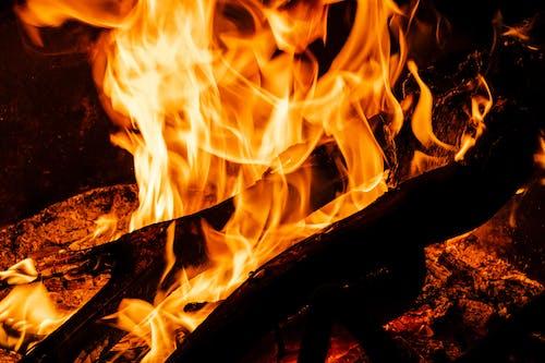 Free stock photo of bonfire, camp, camping