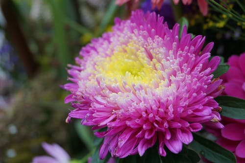 Free stock photo of flower, natural flower, nature, purple flower