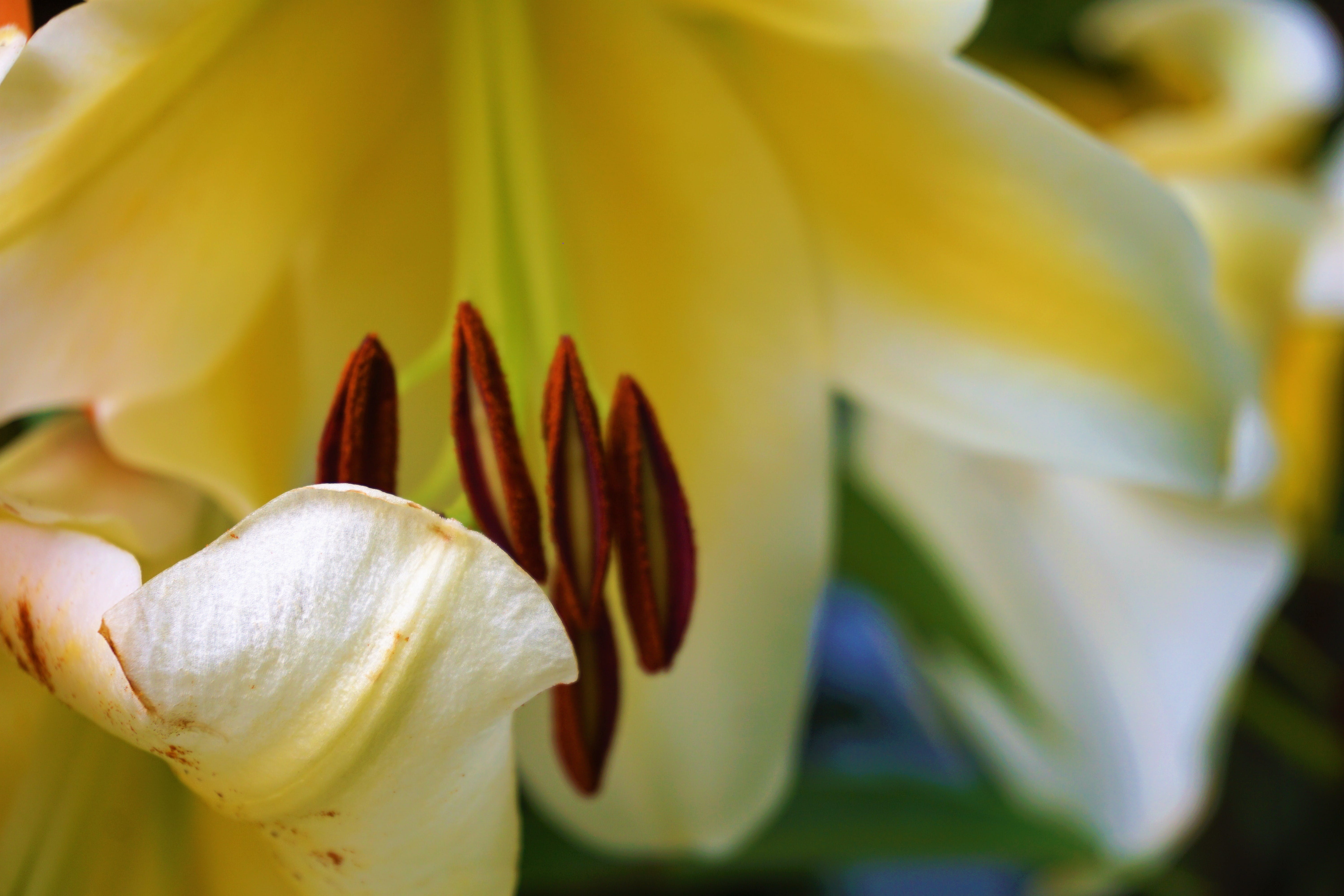 Free stock photo of blurred back, close-up view, flower, macro photo