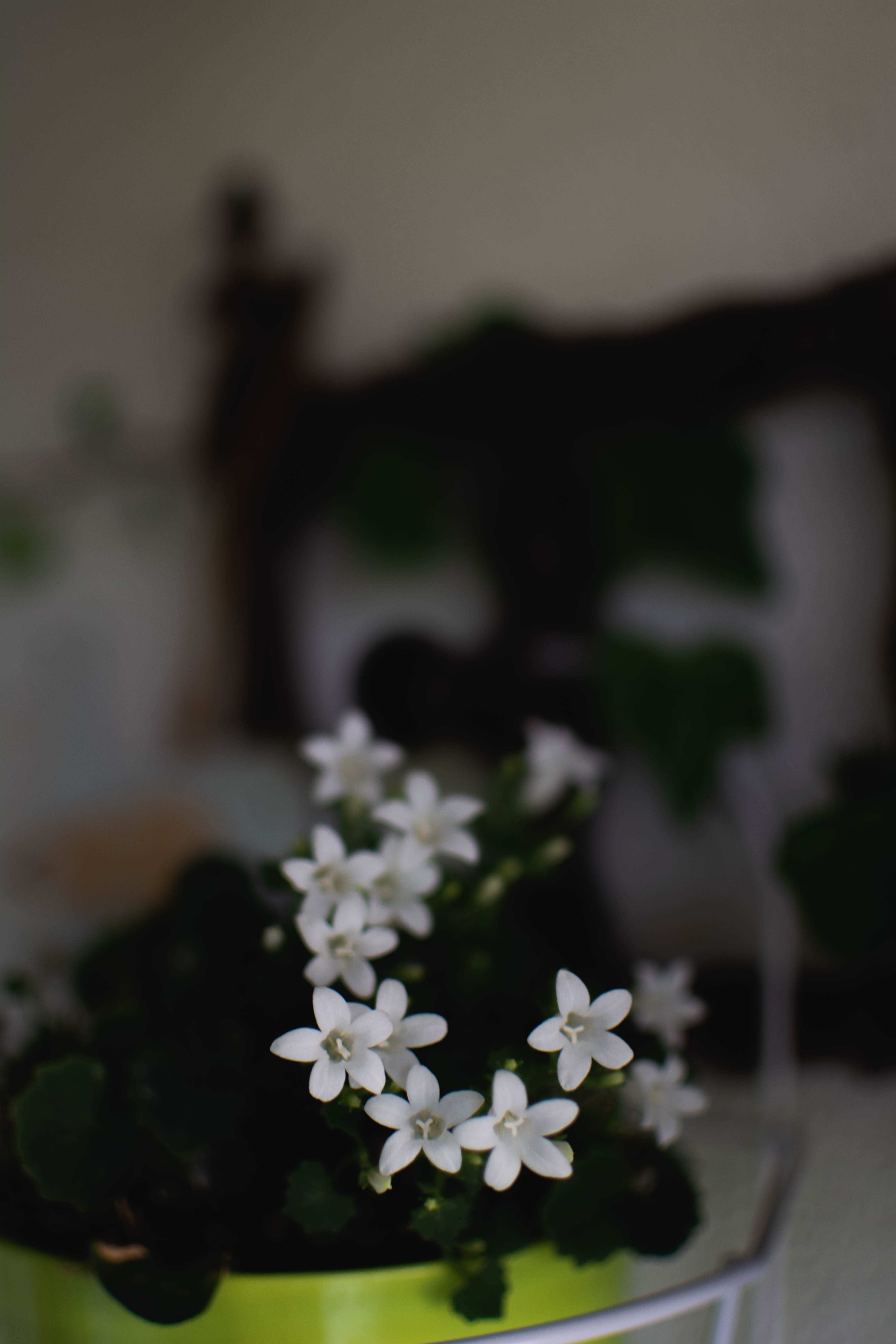 of balkony, flowers, nature, white