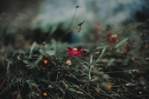 Ilmainen kuvapankkikuva tunnisteilla kastanjanruskea, kasvikunta, kaunis, kenttä