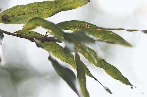 Ilmainen kuvapankkikuva tunnisteilla biologia, kasvikunta, kasvu, kesä