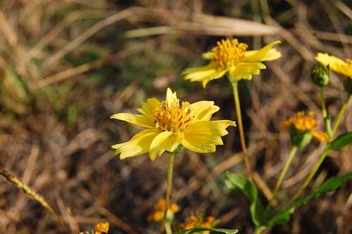 Free stock photo of Flower Rahul Bhoye photography