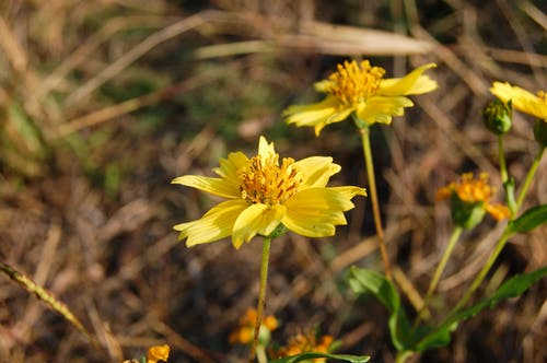 Fotobanka sbezplatnými fotkami na tému kvety rahul bhoye fotografie