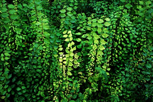 Free stock photo of foliage, growth, nature, plants