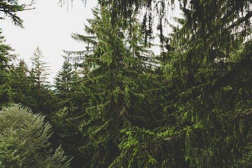 Základová fotografie zdarma na téma les, příroda, rostliny, stromy