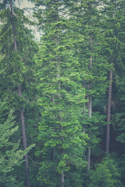 Free stock photo of forest, nature, outdoors, trees