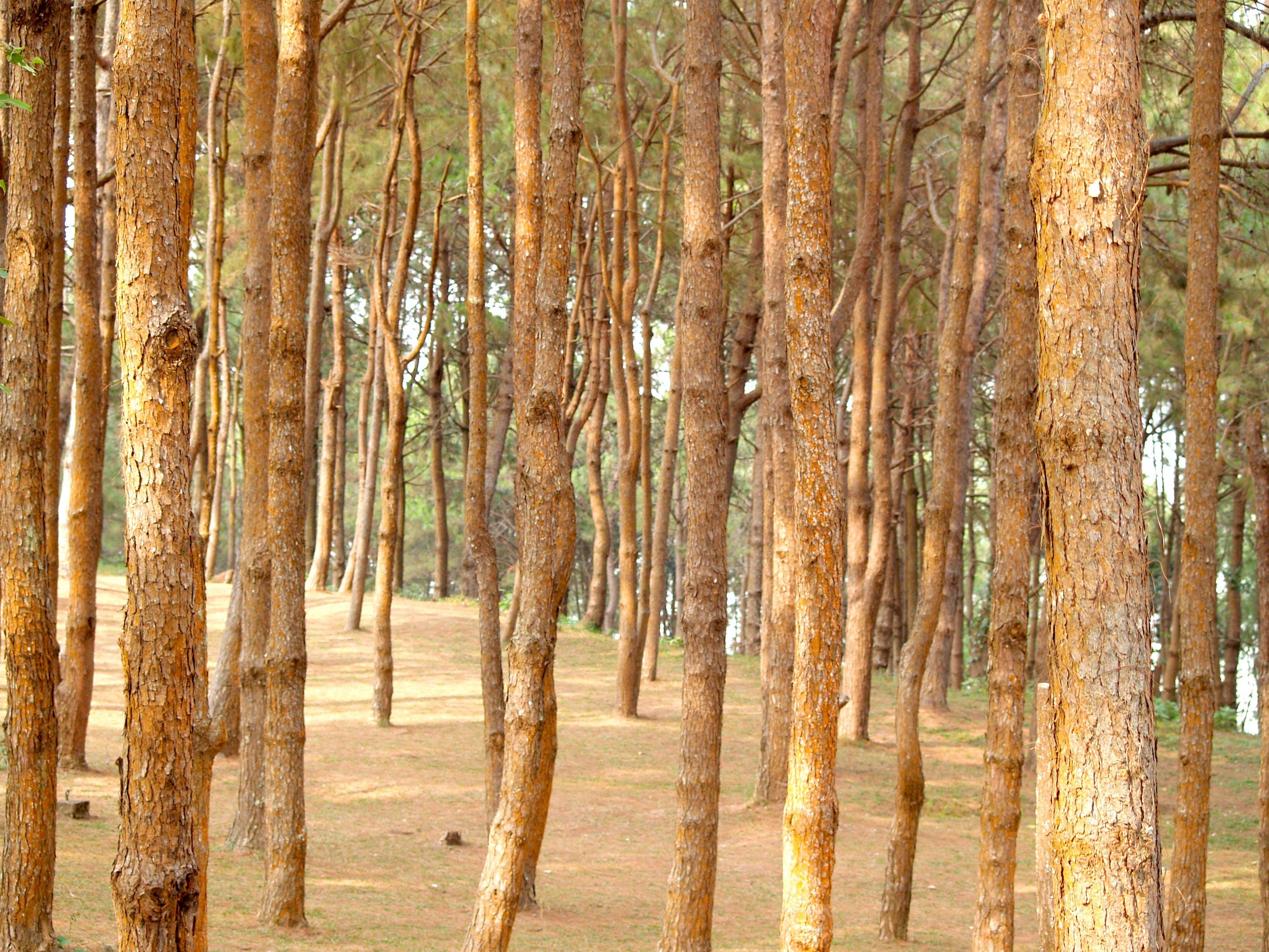 나무 껍질, 숲, 식물, 자연의 무료 스톡 사진