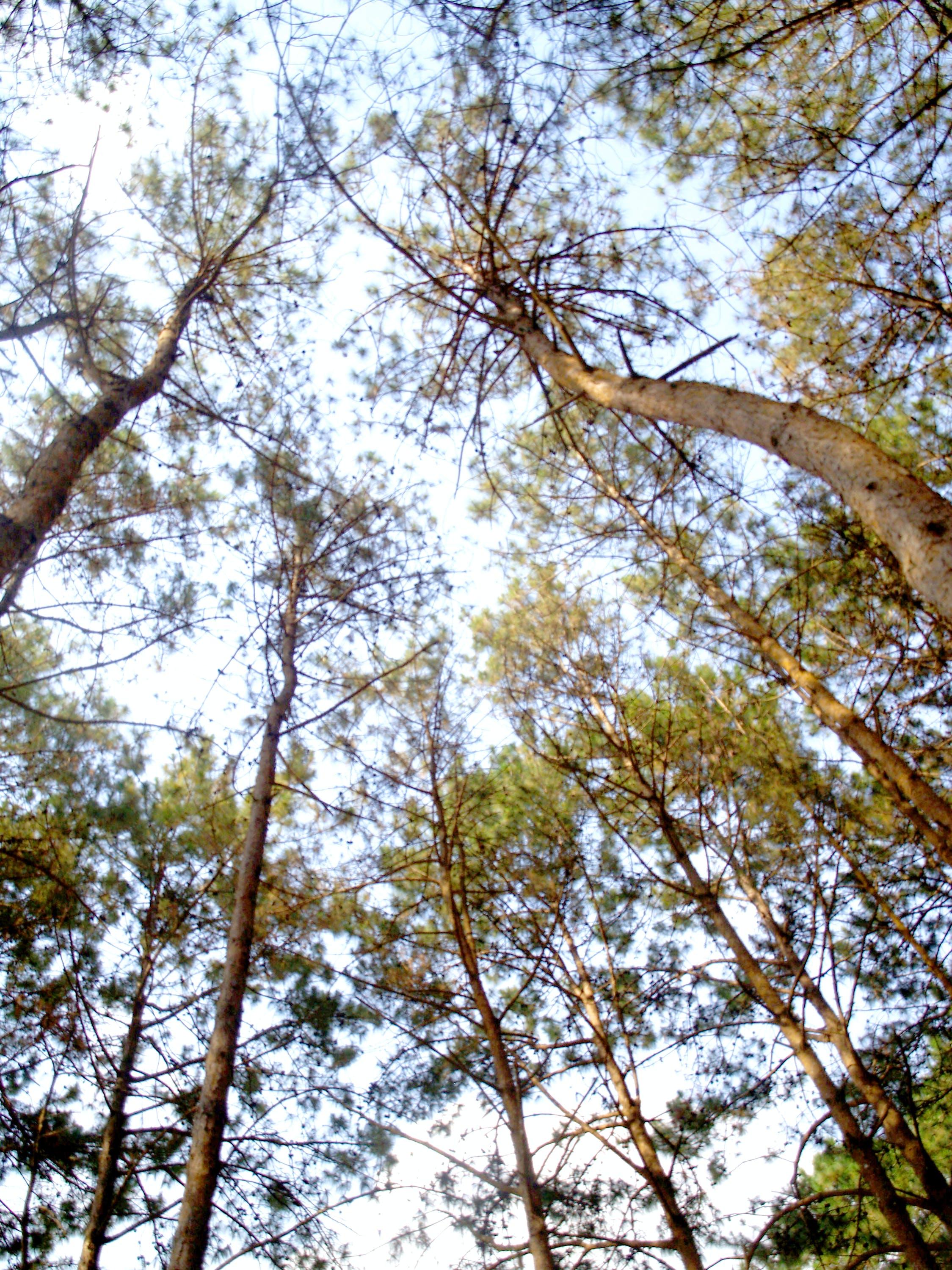 Free stock photo of wood, light, landscape, sunny
