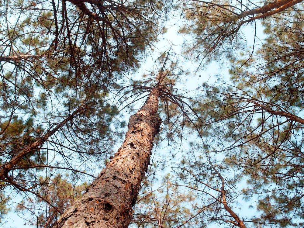 гілки, дерево, жаб'яча перспектива