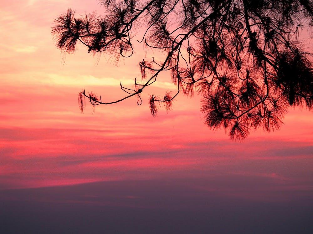 восход, дерево, живописный