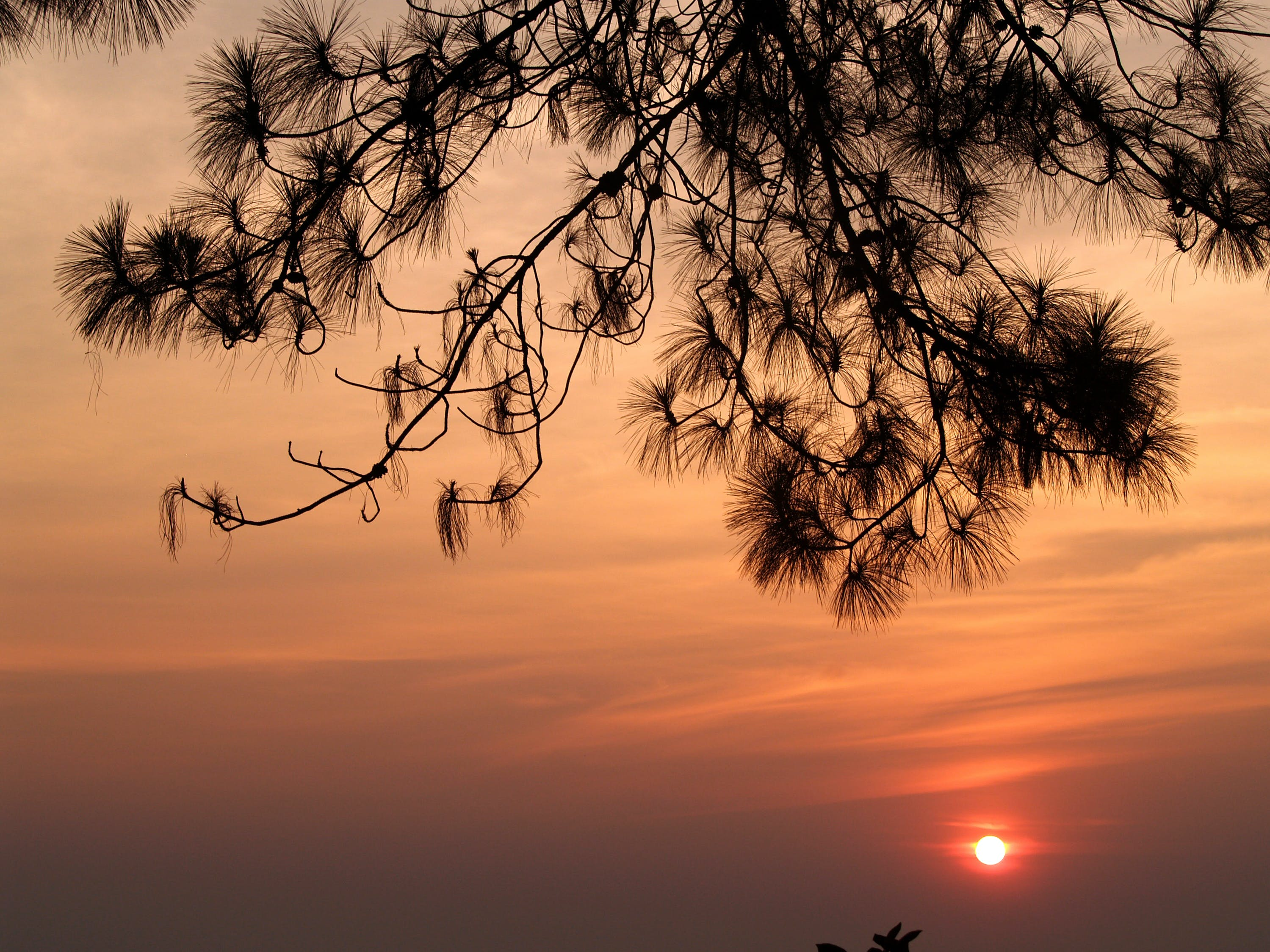 Gratis arkivbilde med bakbelysning, daggry, gren, himmel