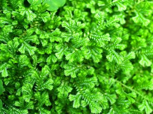 Darmowe zdjęcie z galerii z bliska liść, bliski, blisko, bujna zielenią