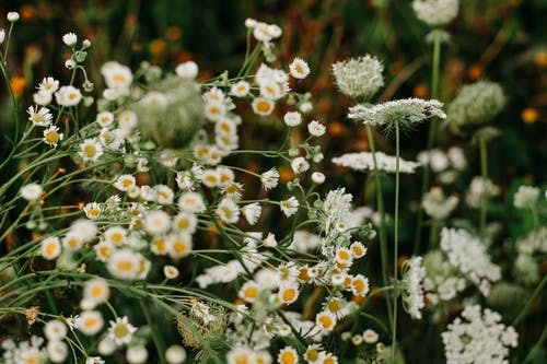 Closeup Photo of White Petaled Flowers on Bloom