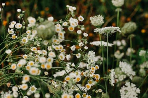 Gratis stockfoto met bloeiend, bloemblaadjes, bloemen, bloesem