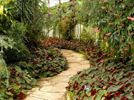 Free stock photo of landscape, shrub, garden, path