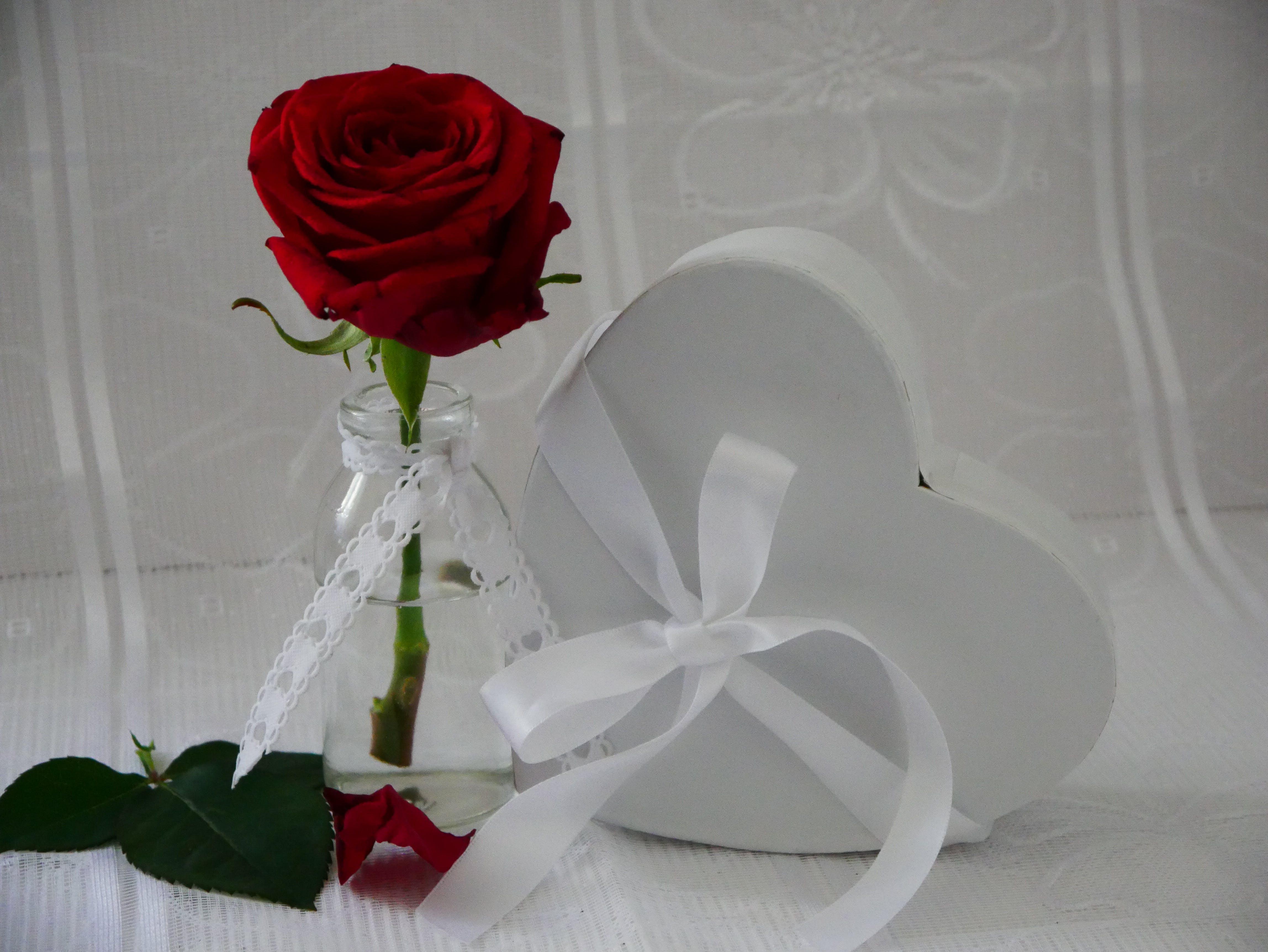 Free stock photo of flower vase, heart, love, rose