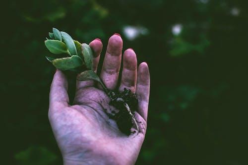 Foto d'estoc gratuïta de brillant, colors, creixement, fons desenfocat